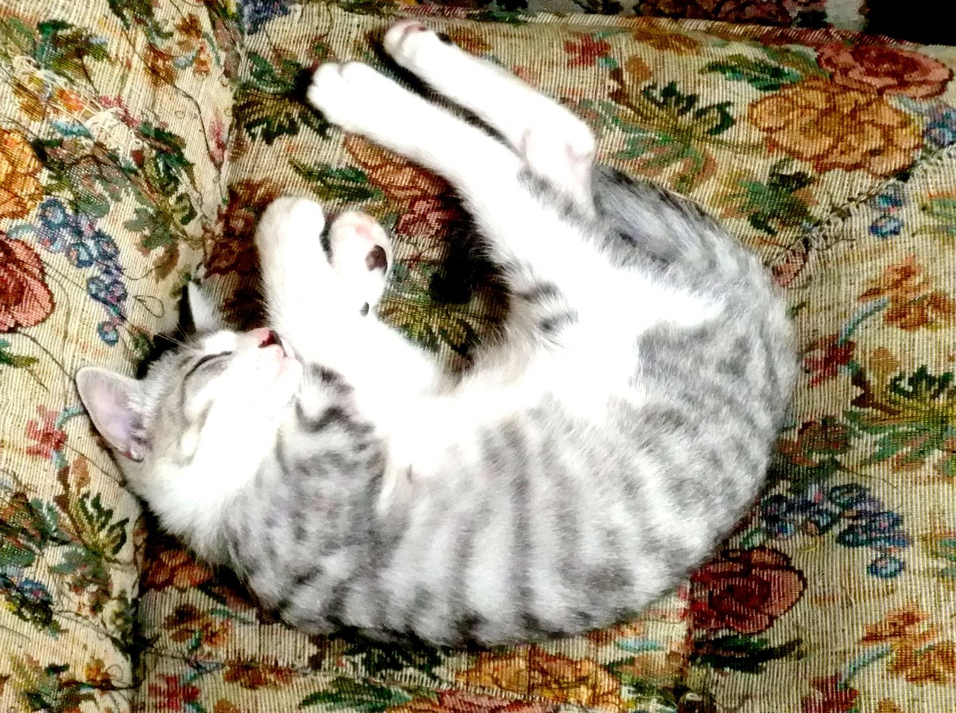 寝付きが悪い人に試してほしい ぐっすり眠れる方法5選
