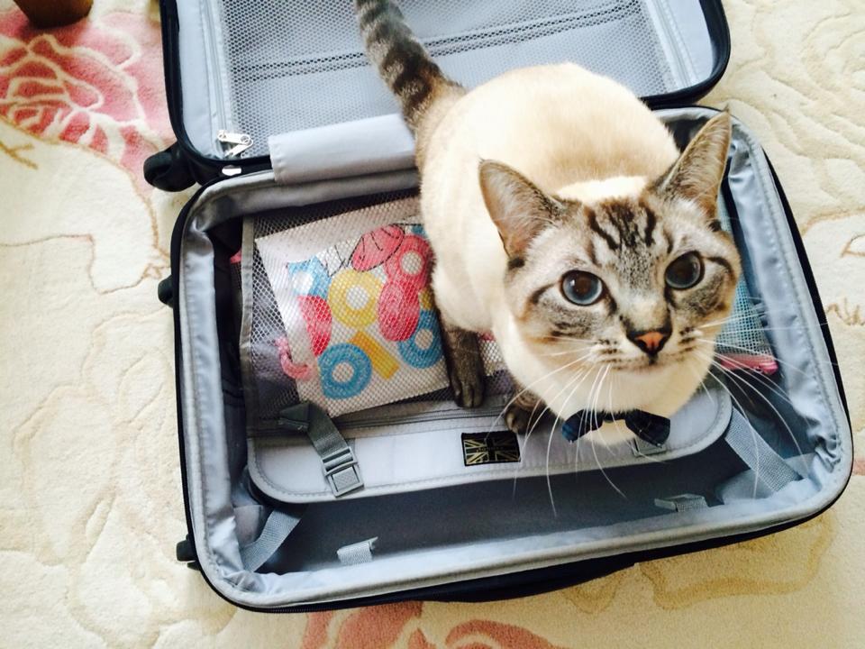 旅行や出張で荷物を減らすには?荷作りに役立つヒント5選